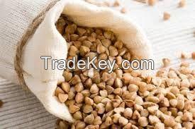 High Quality Roasted Buckwheat Kernel