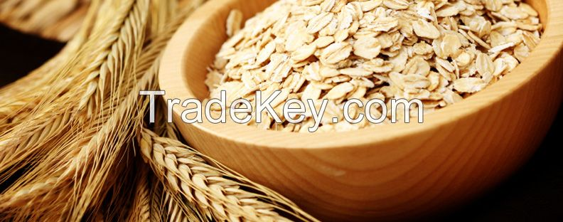 Rolled / Flakes Oats / White oats