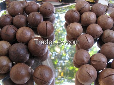 Macadamia Nut without and In Shell