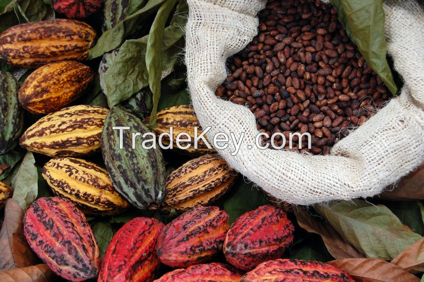 Cocoa extract/weight loss/sports supplement/Theobromine