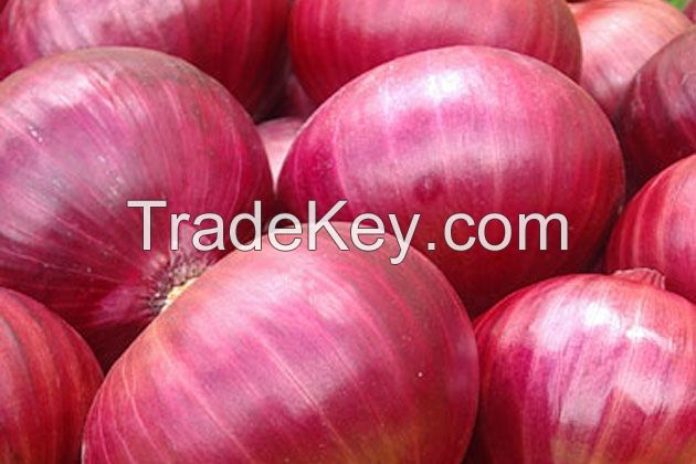 High quality fresh red , white and yellow onion