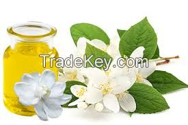 best quality 100% pure Natural jasmine essential oil