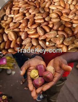 High quality Bitter Kola and Kola Nut