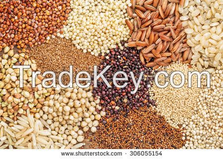 White and Brown Teff Grains