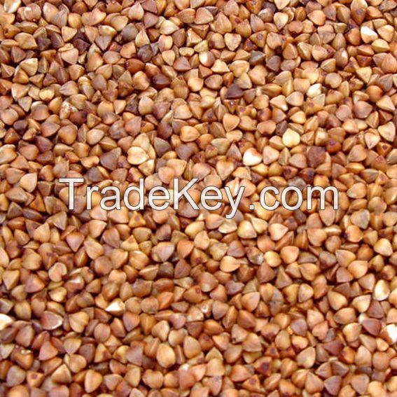 High quality Buckwheat for sale