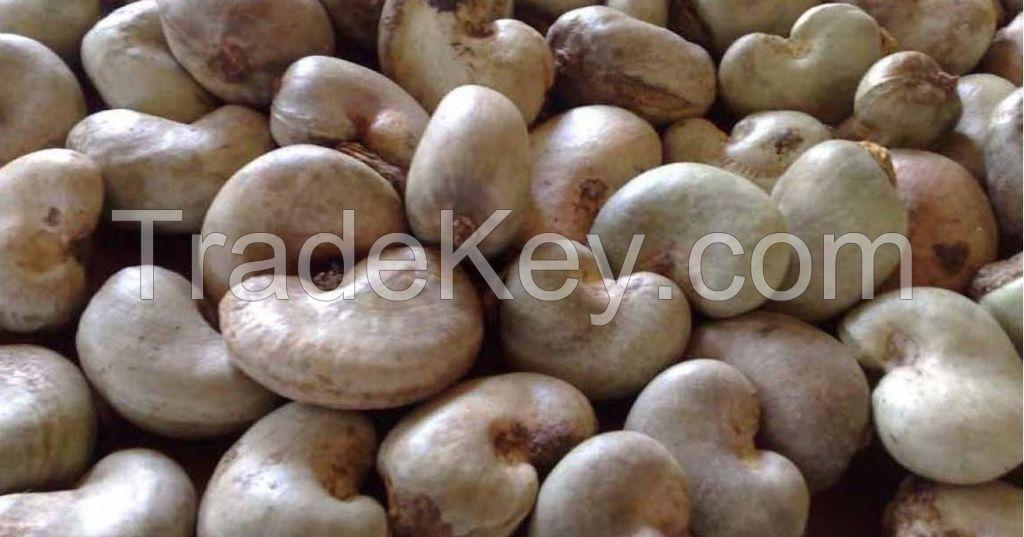 CASHEW NUTS/ CASHEW NUTS KENNELS