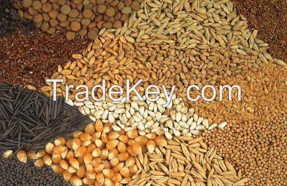 Dried Cloves / Fenugreek Leafs / Cardamom / Alfalfa Seeds / Cotton Seeds / Flax Seeds