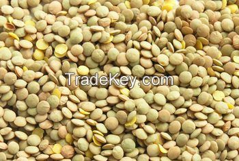 Top quality split and whole lentils for exportation