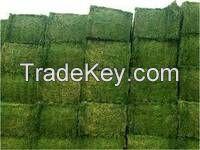 Premium Alfalfa Hay, Rhodes Grass, Oats Hay Ready / Oats Hay Animal Feed for Sale