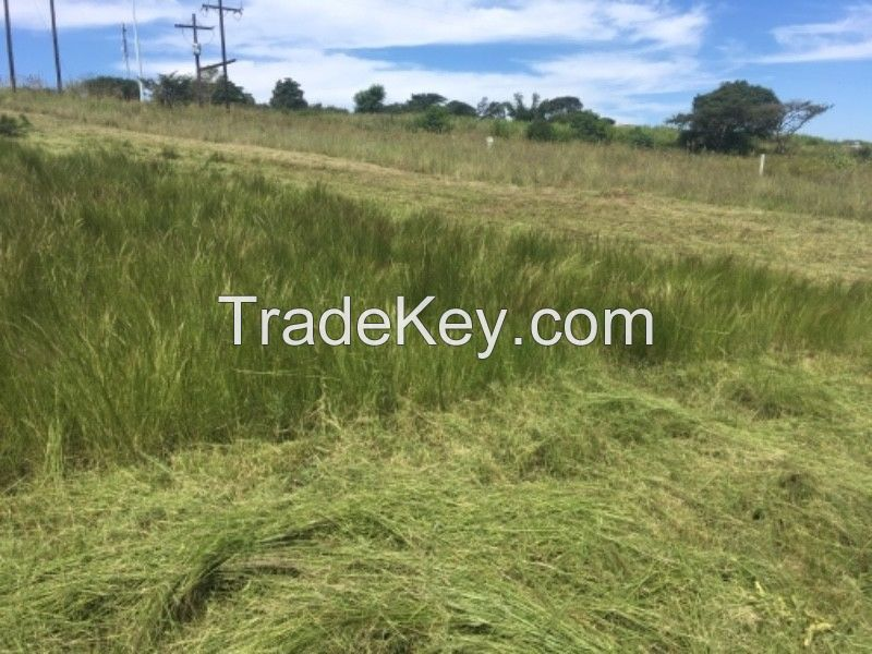 Alfalfa Hay /Lucerne hay bales animal feed for sale