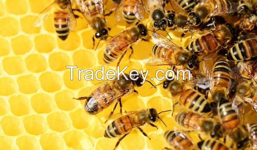 100% natural beeswax raw honey