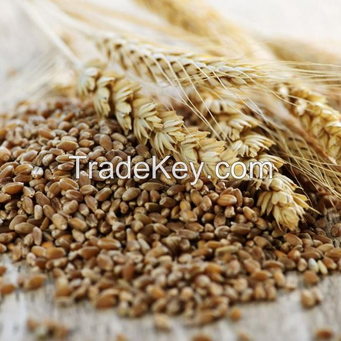 buck wheat dried/ Raw Buck wheat