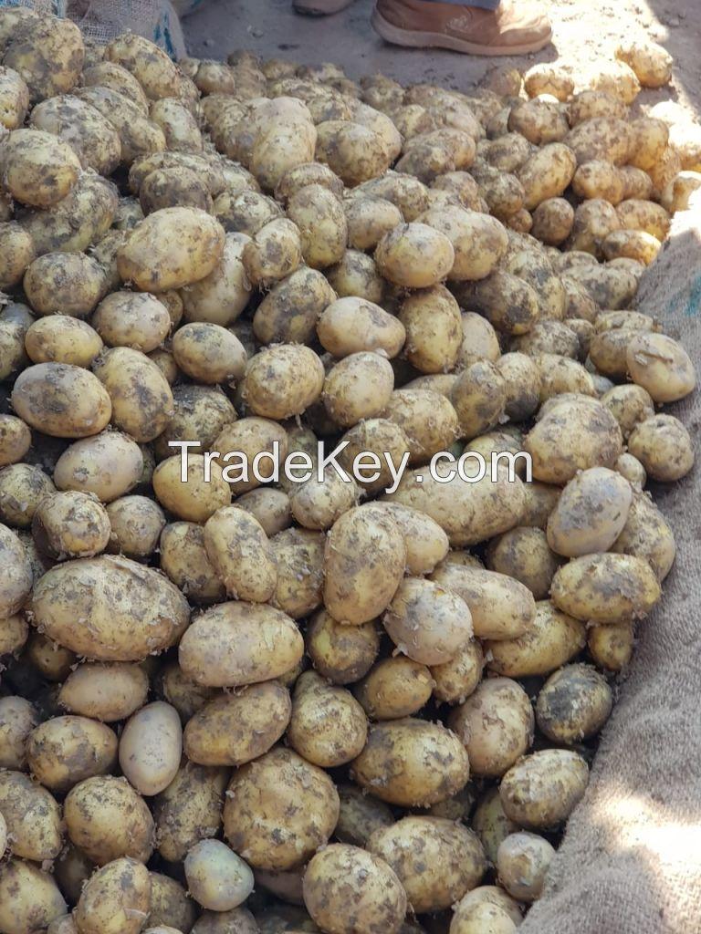 Fresh Potato Pakistan
