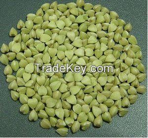 Brown/ Green Buckwheats
