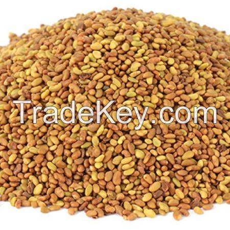 Quality Alfalfa Seeds / organic alfalfa seeds