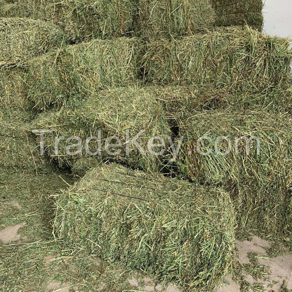 Sell Timothy Hay For Horses