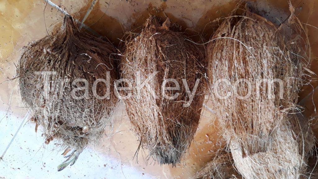 Mature coconut, semi husked mature coconut/ dehusked coconut Origin Indonesia