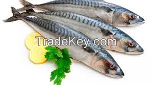MAKEREL FISH