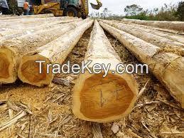 Teak Logs and sawn lumbers