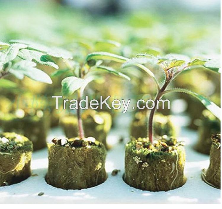 Tomato Seeds Seedling