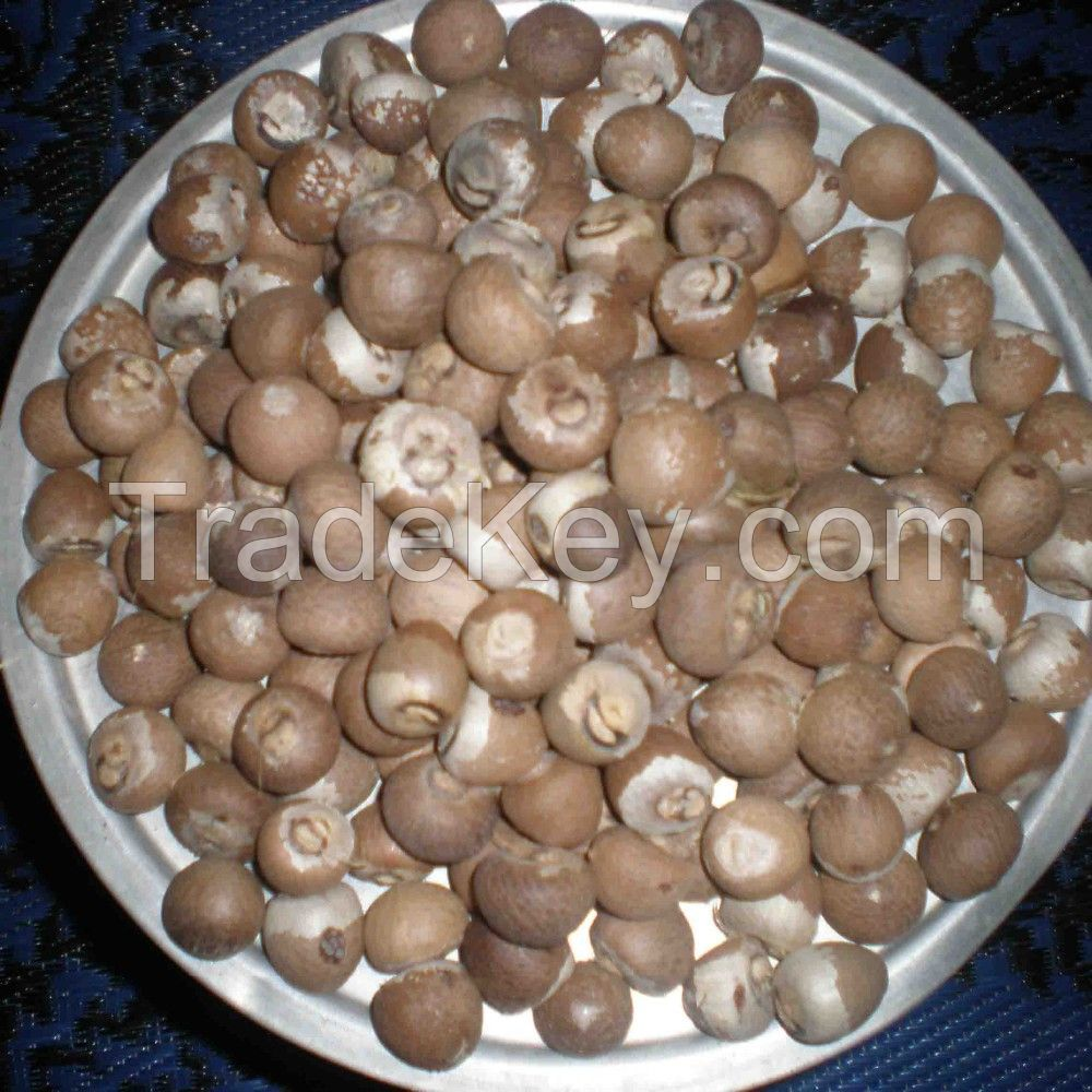 NEW CROP QUALITY  Dried Betel/areca nuts Nuts With High Quality And Competitive Price 2020
