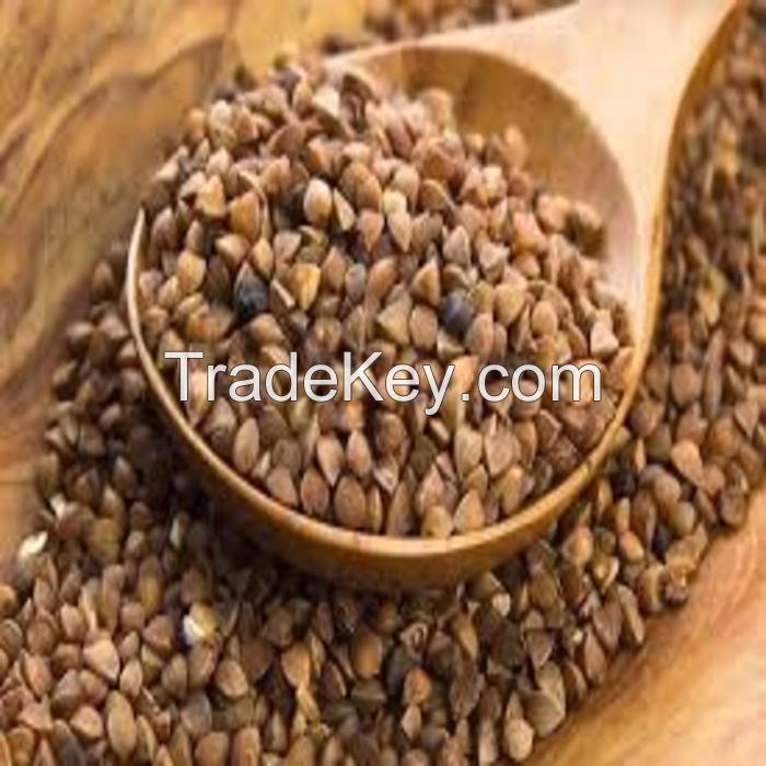 Hot sale Roasted Buckwheat cheap price