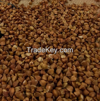 High Quality Raw Buckwheat For Sale