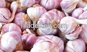 Sell Best Quality Garlic
