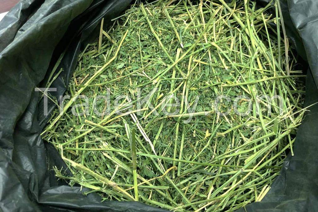 Alfalfa Horse Hay and Alfalfa Hay For Animal Feed