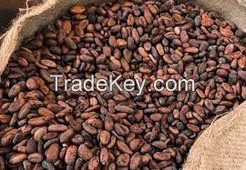 dry cocoa bean
