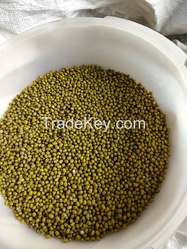 Wholesale Premium Agroculture Organic Dried Mung Bean Sprouts Mung Green Beans