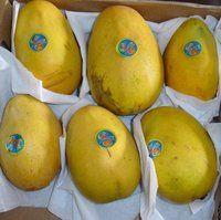 Fresh Mango from Pakistan