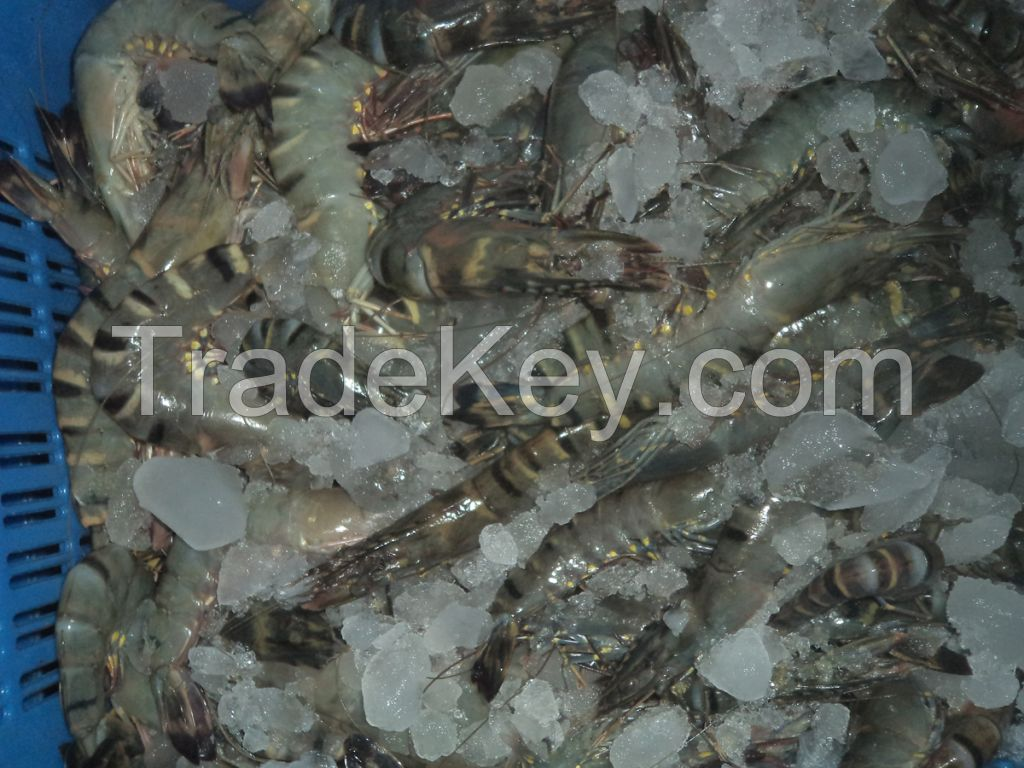 Frozen Black Tiger Shrimp