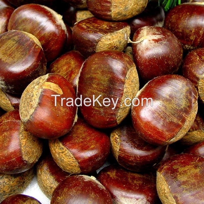 fresh chestnuts / raw chestnuts / dried chestnut