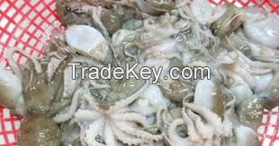 fresh and frozen octopus fish