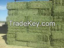 Alfafa Hay Bales / Grade A
