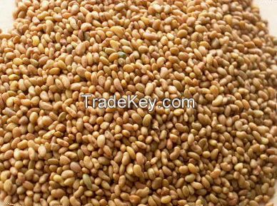 ALFALFA SEEDS AT GOOD PRICE