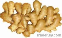 Sell Fresh Ginger And Fresh Air Dried Ginger
