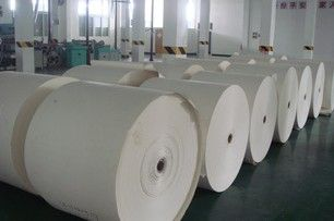 supply PE coated cup paper