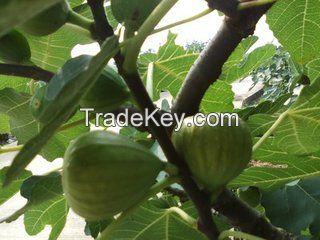 Hot sale figs , fresh fruit figs, dry figs