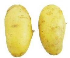 Sell fresh and quality potatoes from Bangladesh.