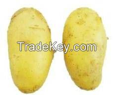 Supply fresh and quality vegetable from Bangladesh