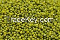 Green mung beans, crop 2015