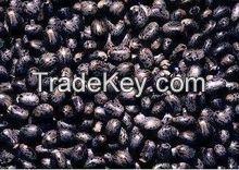 2015 Hot sale jatropha curcas seeds for sowing