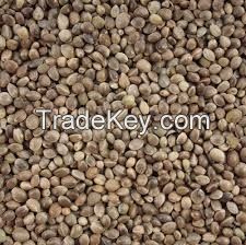 hemp seeds different size