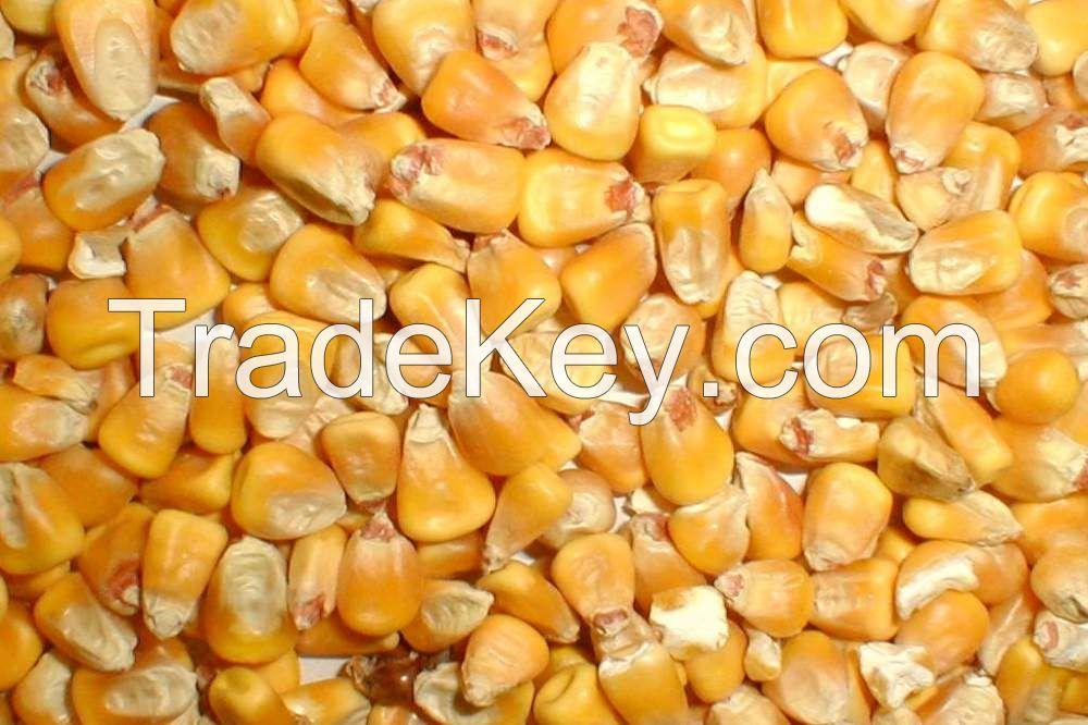 Yellow corn feed FOB port Nikolaev Ukraine