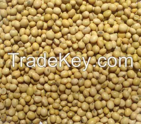 Soybeans FOB Odessa Ukraine