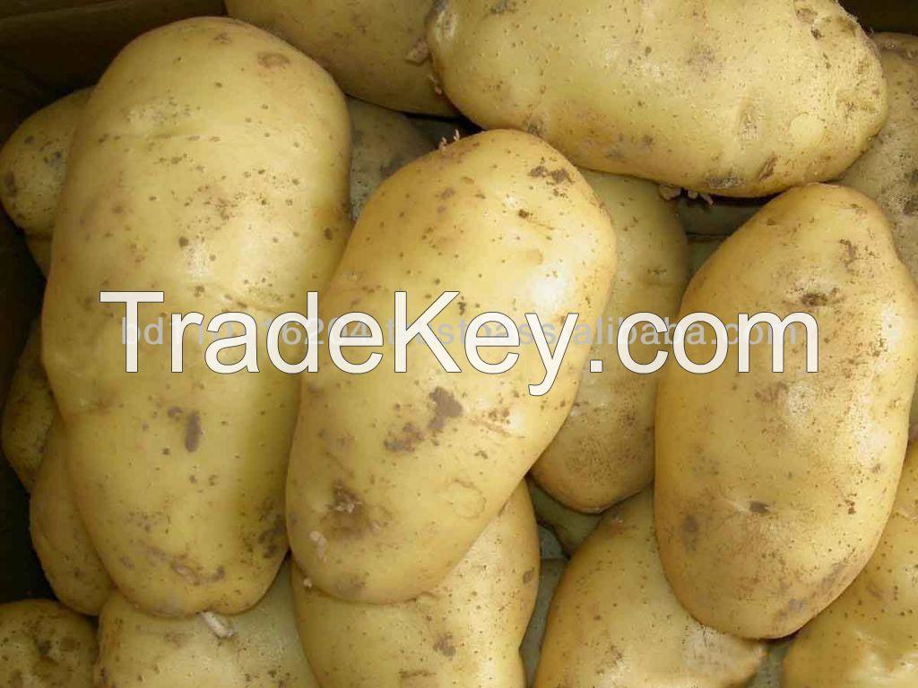 20000 Ton Fresh Potato