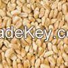 Hard Red Winter Wheat