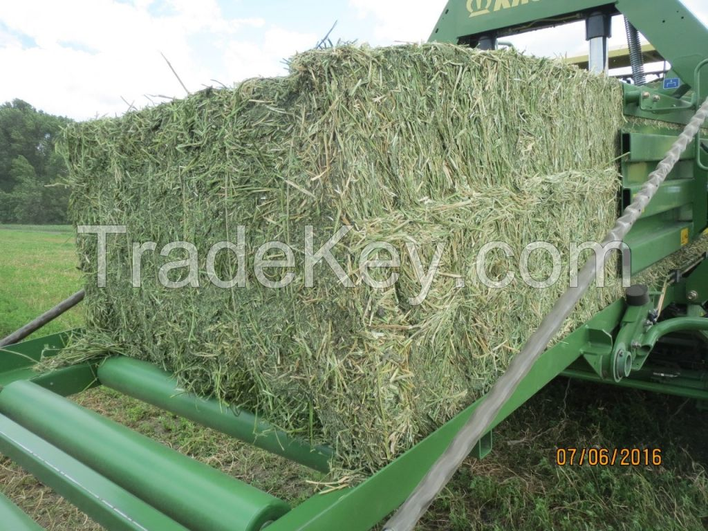 RHODES GRASS, ALFALFA, WHEAT STRAW, ALL KIND OF BRAN, PALLET, CAKE AND MEAL